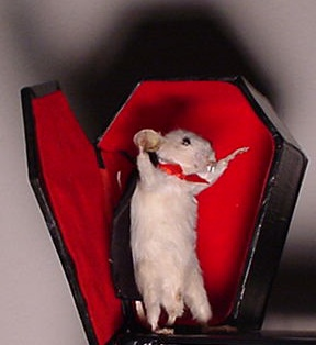 Vampire Mouse