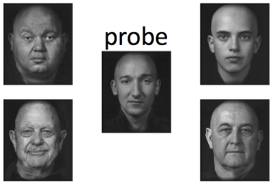 probe and references